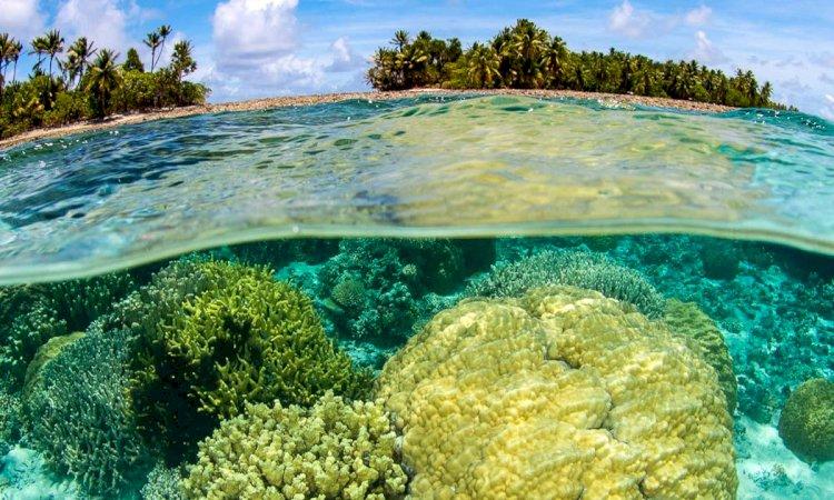Novel tool sheds light on coral reef erosion