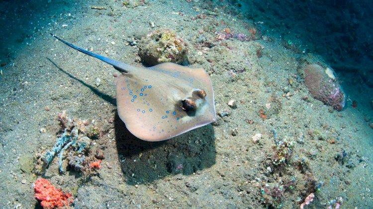 Research: Ocean warming will soon affect marine communities in the deep ocean