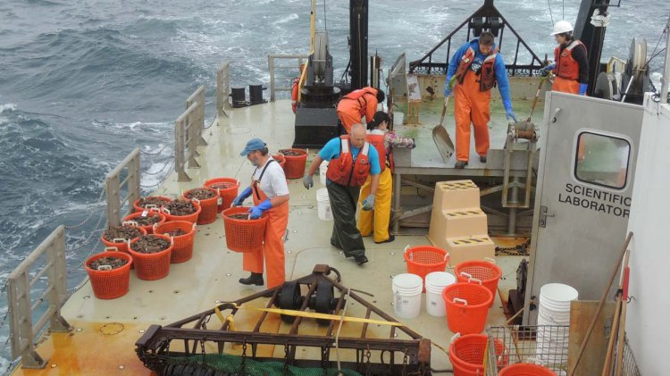 NOAA designates two new offshore aquaculture development zones in US waters
