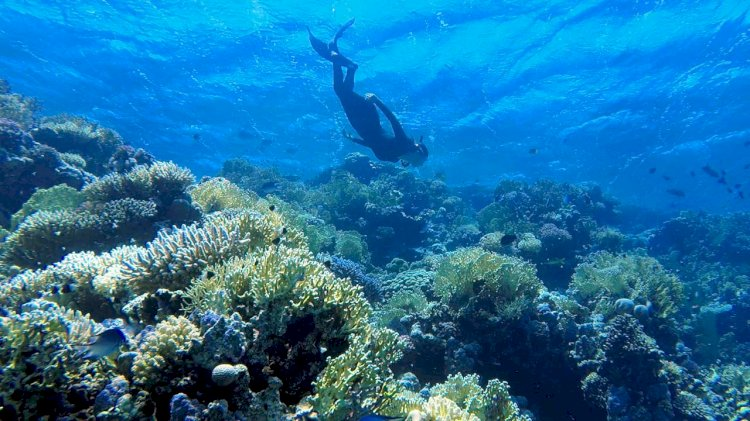 Research: Ocean acidification causing coral 'osteoporosis' on iconic reefs