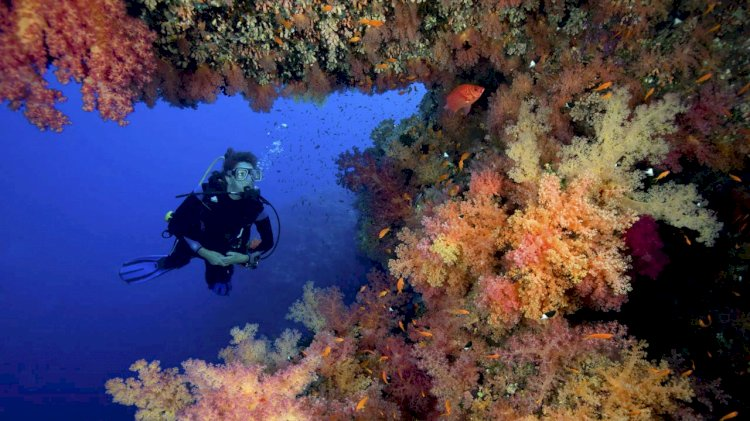 NOAA and partners advance mission to restore Florida Keys coral reefs