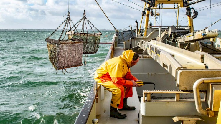 Reducing fishing fleet in the Baltic with support from EU funds