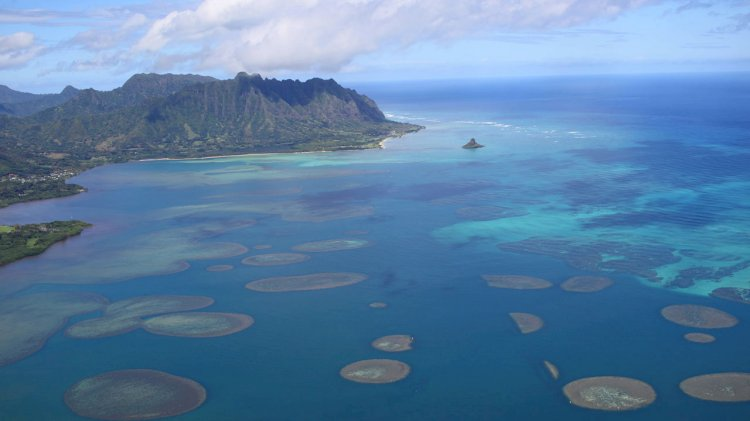 Climate change responsible for record sea temperature levels, says study