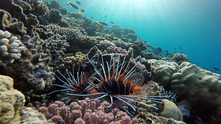 NOAA grants to advance coral reef conservation science and management