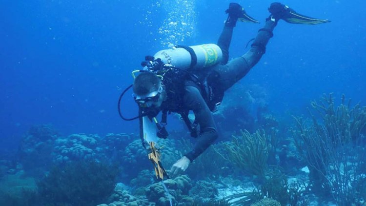 Researchers find diverse communities comprise bacterial mats threatening coral reefs