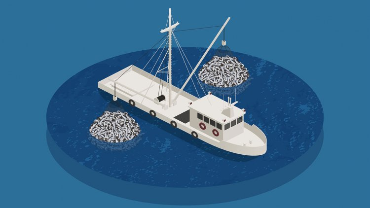 Research: Leaving more big fish in the sea reduces CO2 emissions