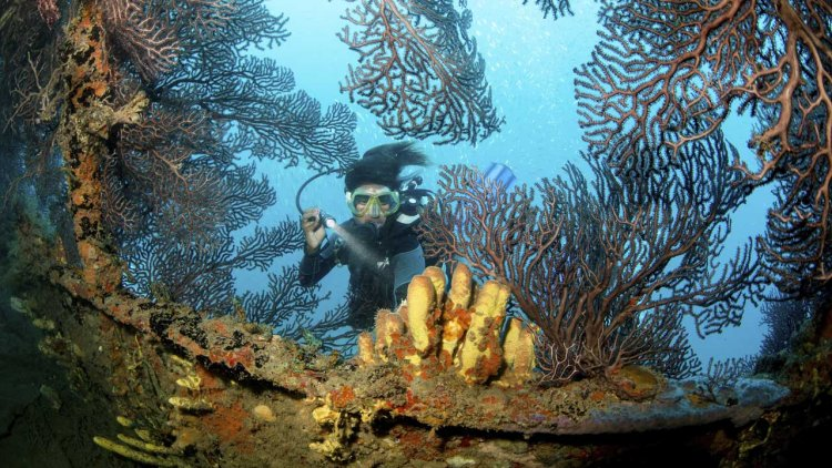U.S. coral reefs' health assessed for the first time on a national scale