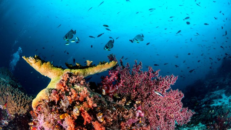 First discovery in 120 years: a new coral reef in Australia's Great Barrier Reef