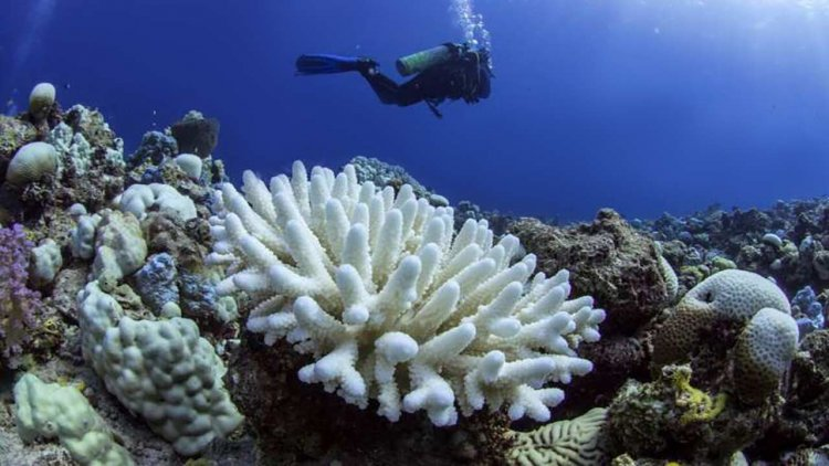 Scientists organize to tackle crisis of coral bleaching