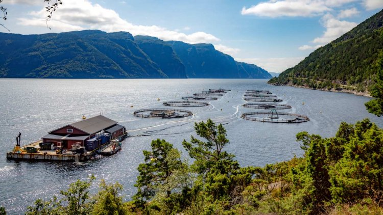 BMT to support the Scottish Seafood Industry with innovative solutions