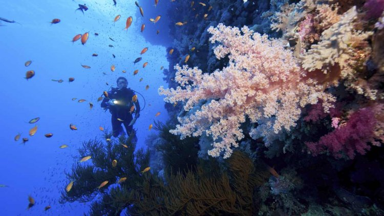 CRISPR helps researchers uncover how corals adjust to warming oceans