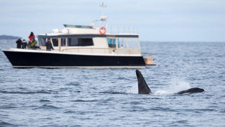 Study: Human activities sound an alarm for sea life