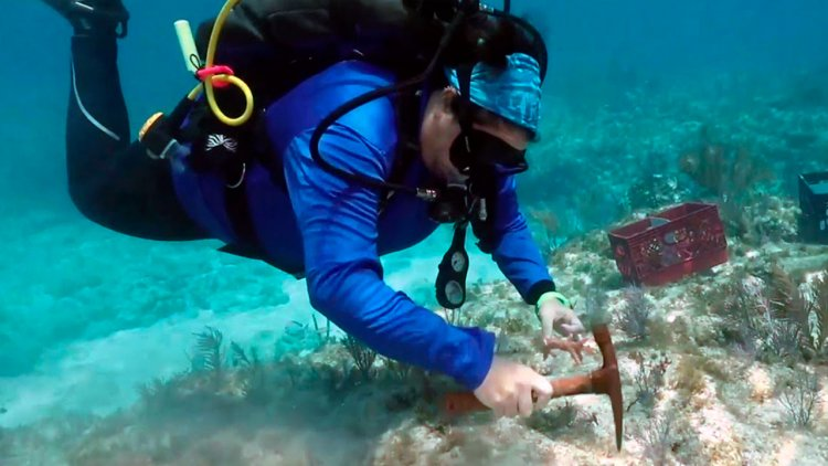 Large-scale coral restoration begins in Florida Keys sanctuary