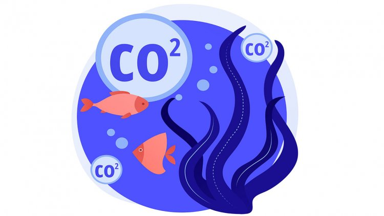 SeaCURE will study a new method of capturing carbon from seawater