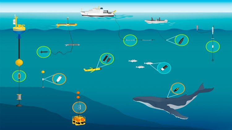 Scientists create new data mapping tool to track whale detections