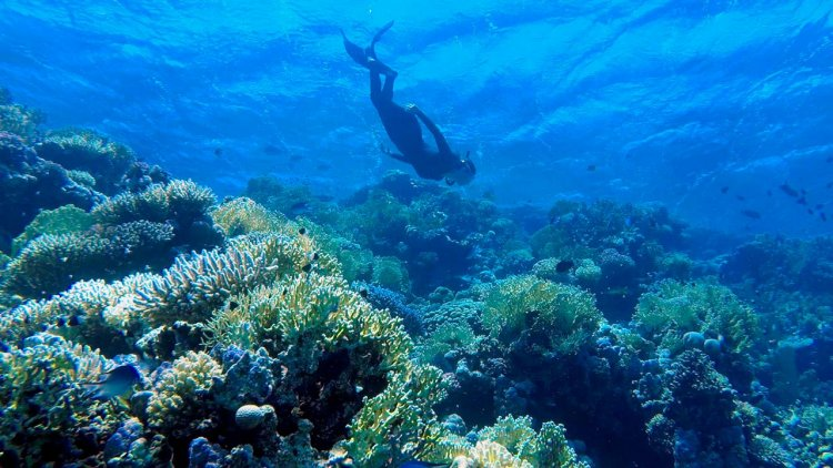 Innovative science approach is a game-changer for global reef recovery efforts