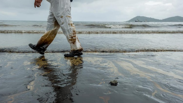 Disaster in Novorossiysk: The area of oil spill is 400 thousand times higher than declared