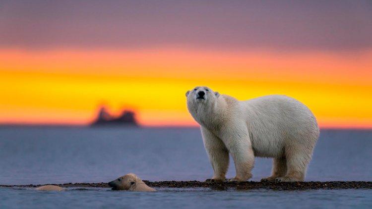 Akvaplan-niva leading new project on Polar Front ecology