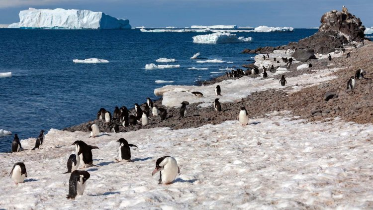 Increased snowfall will offset sea level rise from melting Antarctic ice sheet