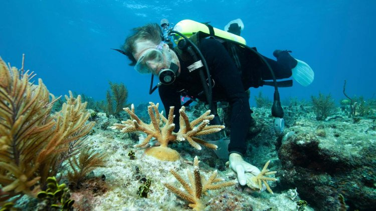 AD Ports Group and NYUAD advance coral relocation research efforts