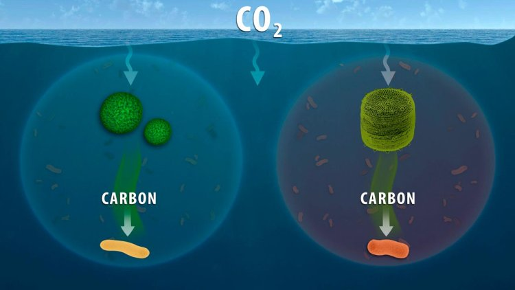 Microbiology researchers further understanding of ocean's role in carbon cycling
