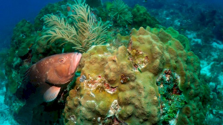 NOAA asked community to comment on proposed changes to National Marine Sanctuary