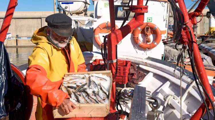 New rules on medical examinations of seafarers and fishermen in Denmark