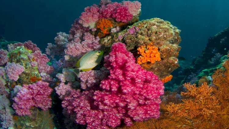 Oil company Saudi Aramco protects and enhances coral reefs