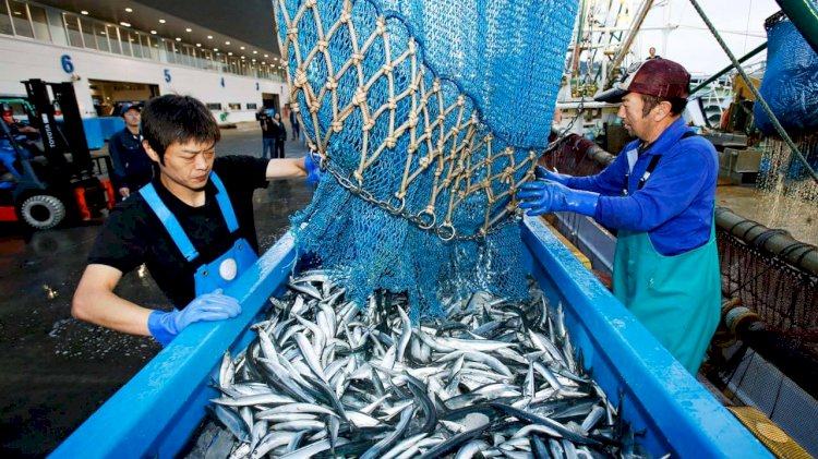 AI/IoT technologies help to develop the fisheries industry in Japan