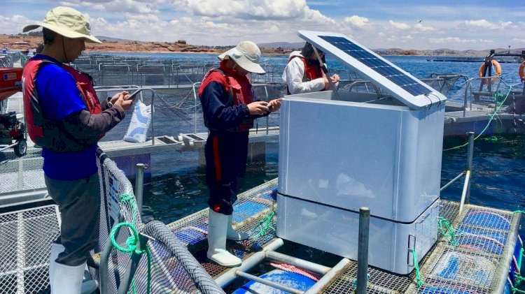 UMITRON deploys AI technology for fish farmers in Peru
