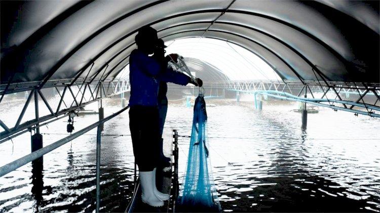 AI technologies help to develop a model for shrimp aquaculture
