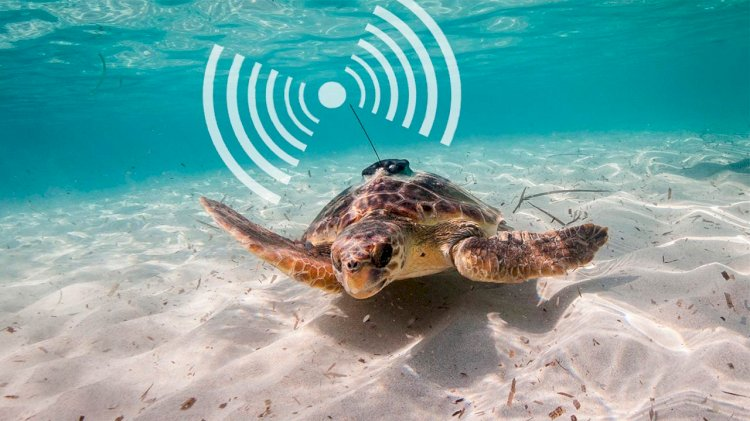 Animals carrying sensors could help humans monitor oceans