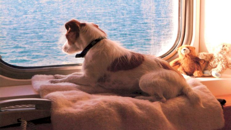 Brittany Ferries pets and their owners can travel in confidence in 2020