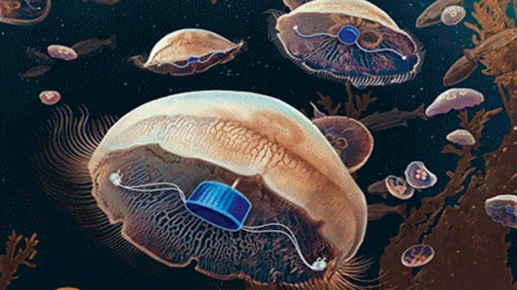 Scientists create jellyfish with swimming superpowers